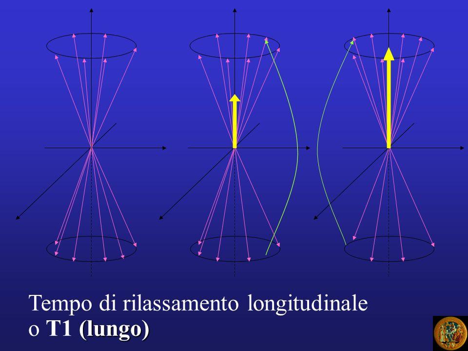 Tempo di rilassamento longitudinale (lungo) o T1 (lungo)