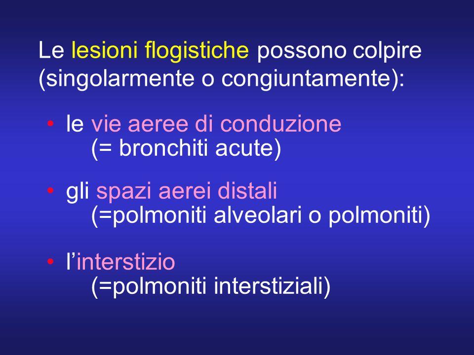 Le lesioni flogistiche possono colpire (singolarmente o congiuntamente): le vie aeree di conduzione (= bronchiti acute) gli spazi aerei distali (=polm