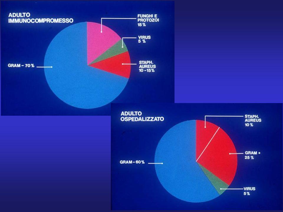 Schema a torte polmoniti in immunodepresso