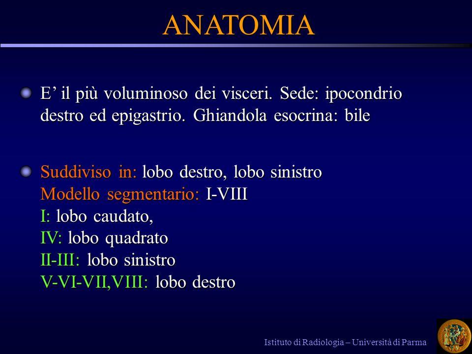ANATOMIA ANATOMIA E il più voluminoso dei visceri. Sede: ipocondrio destro ed epigastrio. Ghiandola esocrina: bile Suddiviso in: lobo destro, lobo sin