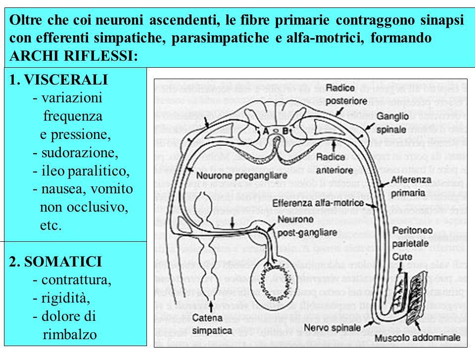 Il numero di fibre dolorifiche primarie che penetrano nel midollo, è maggiore di quello dei neuroni secondari che formano le vie spinotalamiche, per cui più afferenti primarie, viscerali e somatiche possono convergere sullo stesso neurone secondario.