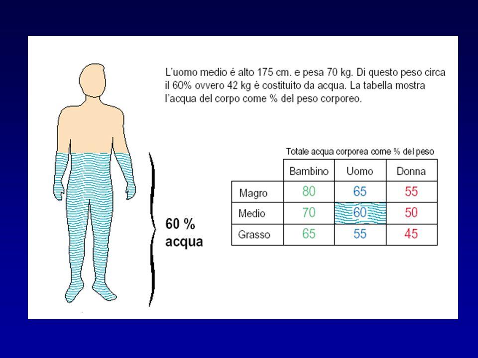 La correzione delliposodiemia da parte del rene richiede lescrezione di H 2 O libera (da soluti) Requisiti per adeguata eliminazione di H 2 O libera - adeguato flusso di preurina al nefrone distale - normale riassorbimento di Na a livello dellansa di Henle e distale (creazione di preurina ipotonica) - ADH soppresso in presenza di iposodiemia (o ipo-osmolarità)