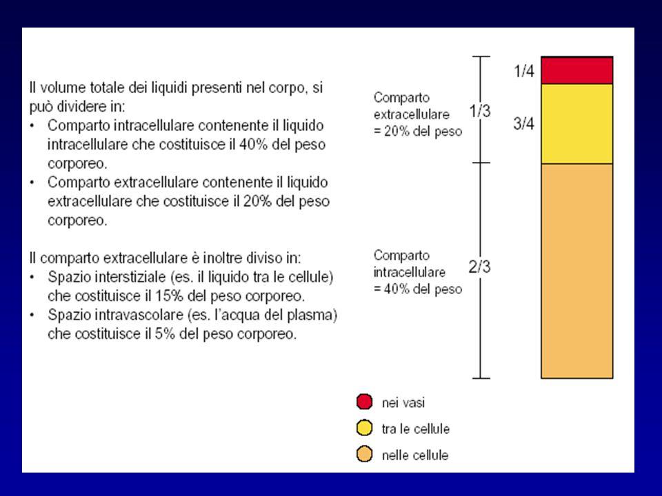 Distribuzione dei fluidi corporei La distribuzione e la composizione dei fluidi corporei sono strettamente regolate, in modo da assicurare condizioni costanti al milieu interno Presupposto fondamentale di tale regolazione è costituito dal mantenimento del bilancio dei fluidi