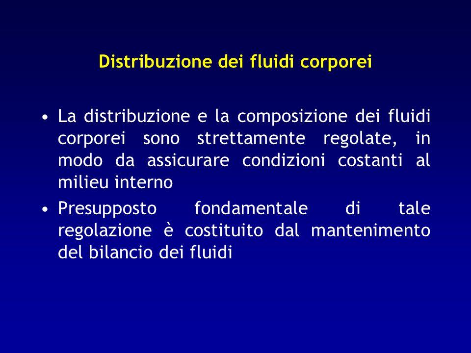 Bilancio dei fluidi: 2 tipi di bilancio Interno (distribuzione dei fluidi tra i compartimenti): basato sugli scambi tra i differenti compartimenti idrici corporei.