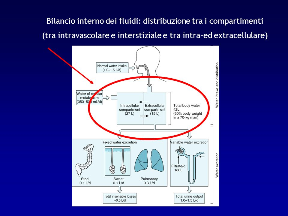 Il mantenimento del patrimonio dei fluidi corporei è garantito dal controllo del bilancio esterno (entrate ed uscite) di H 2 O