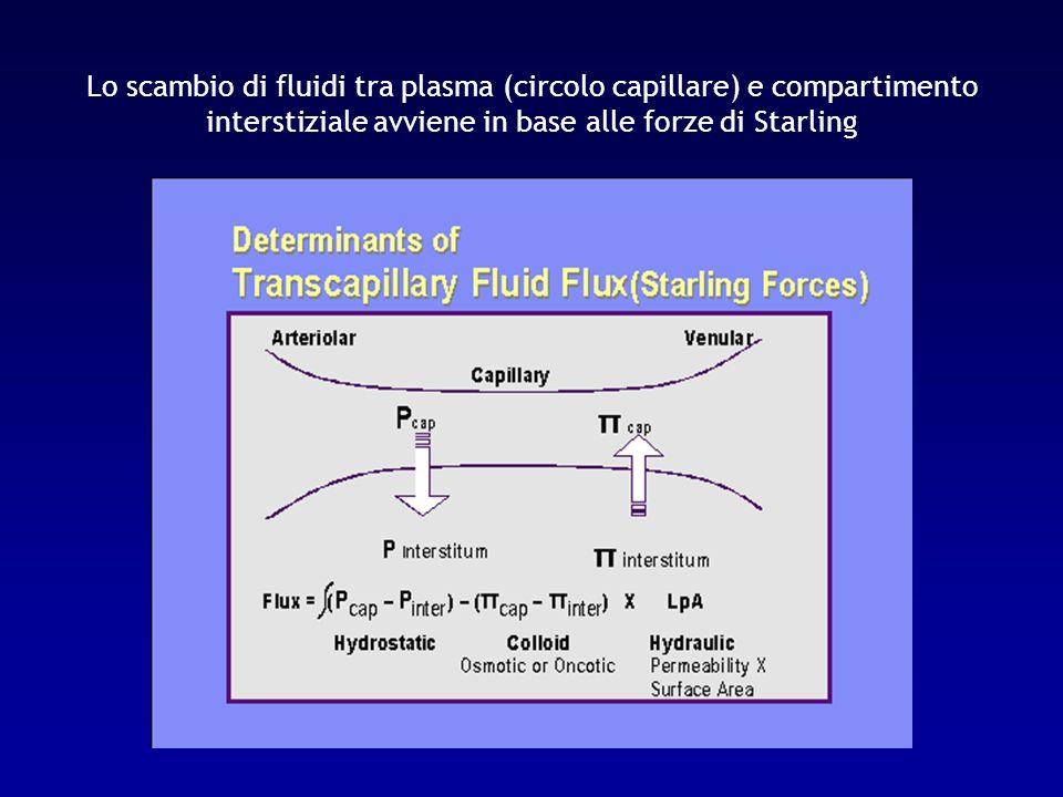 Leffetto netto delle forze di Starling è differente ai vari livelli del circolo capillare