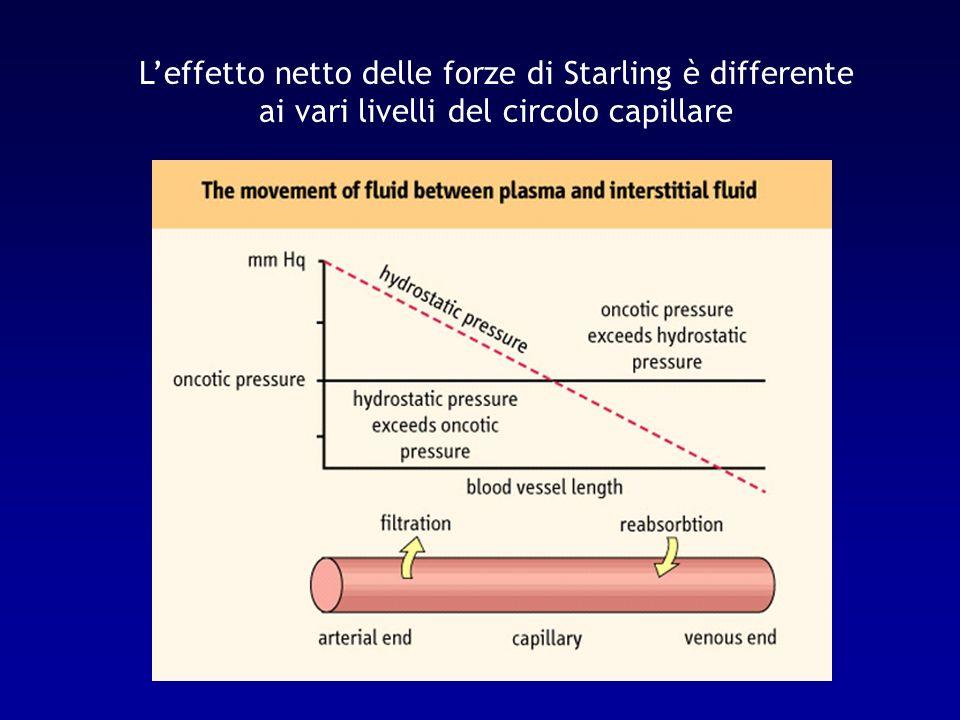 Scambio di fluidi tra intra- ed extracellulare La distribuzione dei fluidi tra i compartimenti intra ed extracellulare avviene in base a gradienti osmotici (differenze di tonicità o di osmolarità efficace), rispettando alcuni principi di ordine generale