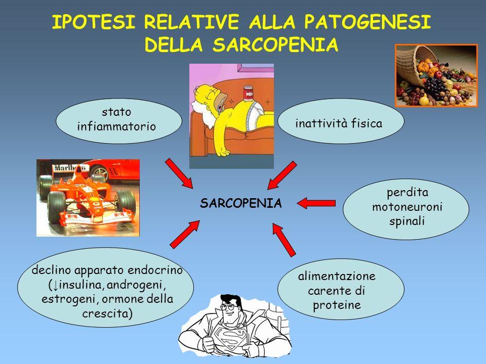 IPOTESI RELATIVE ALLA PATOGENESI DELLA SARCOPENIA SARCOPENIA stato infiammatorio inattività fisica perdita motoneuroni spinali declino apparato endocr