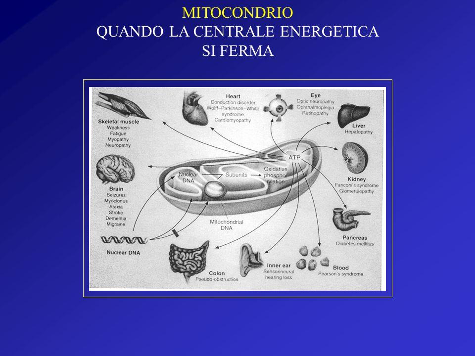 MITOCONDRIO QUANDO LA CENTRALE ENERGETICA SI FERMA