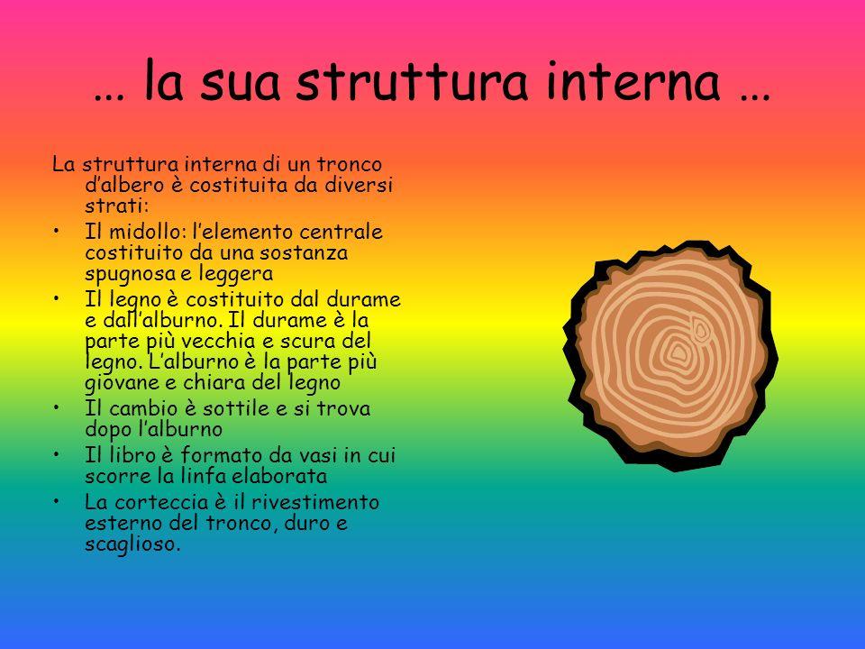 … la sua struttura interna … La struttura interna di un tronco dalbero è costituita da diversi strati: Il midollo: lelemento centrale costituito da un