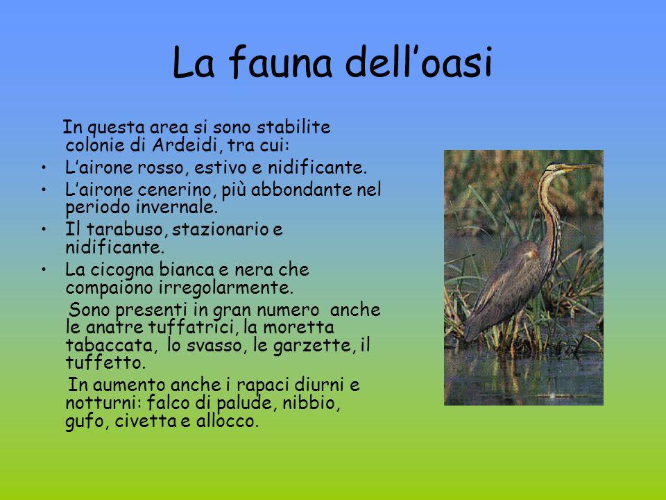 La flora delloasi Lambiente si presenta con numerose specie sommerse, natanti ed emerse: millefoglie dacqua, lerba vescica, lerba scopina e ninfee.