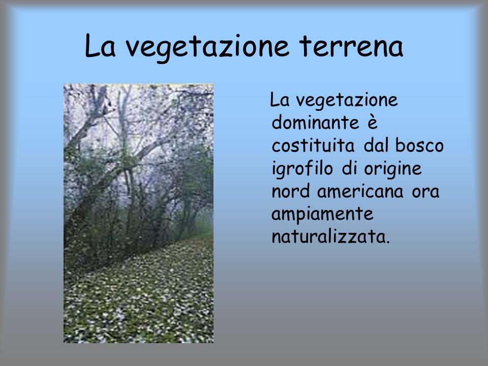 La vegetazione terrena La vegetazione dominante è costituita dal bosco igrofilo di origine nord americana ora ampiamente naturalizzata.