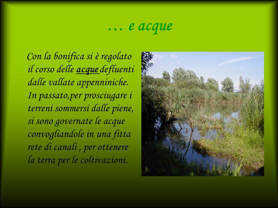 … e acque Con la bonifica si è regolato il corso delle acque defluenti dalle vallate appenniniche. In passato,per prosciugare i terreni sommersi dalle