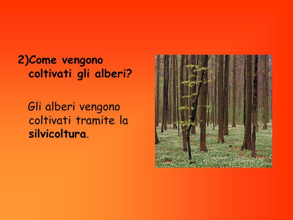 2)Come vengono coltivati gli alberi? Gli alberi vengono coltivati tramite la silvicoltura.
