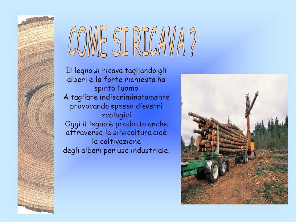 Il legno si ricava tagliando gli alberi e la forte richiesta ha spinto luomo A tagliare indiscriminatamente provocando spesso disastri ecologici Oggi