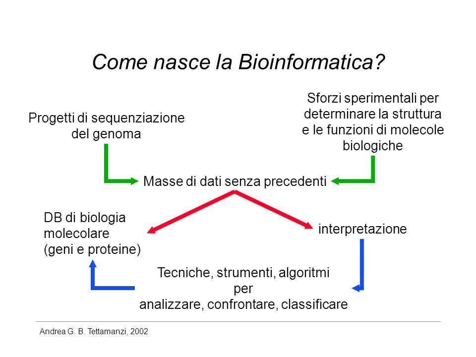 Andrea G. B. Tettamanzi, 2002 Come nasce la Bioinformatica? Progetti di sequenziazione del genoma Sforzi sperimentali per determinare la struttura e l