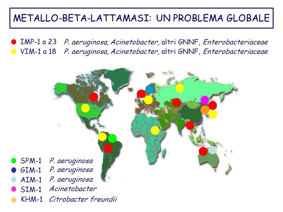 P. aeruginosa, Acinetobacter, altri GNNF, Enterobacteriaceae VIM-1 a 18 IMP-1 a 23 METALLO-BETA-LATTAMASI: UN PROBLEMA GLOBALE Acinetobacter SIM-1 P.
