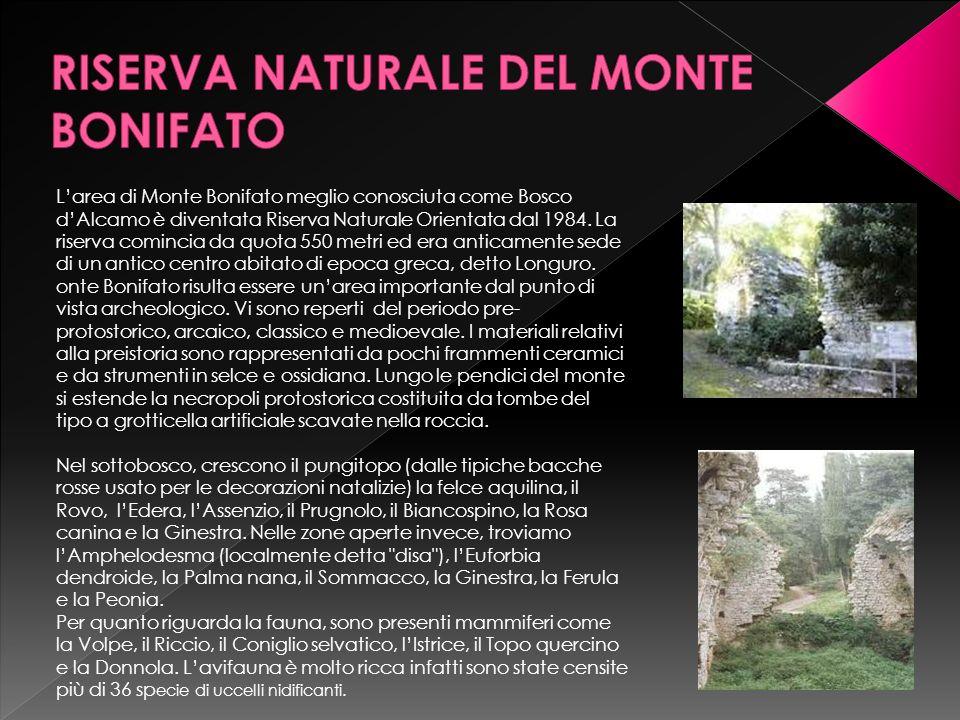 Larea di Monte Bonifato meglio conosciuta come Bosco dAlcamo è diventata Riserva Naturale Orientata dal 1984. La riserva comincia da quota 550 metri e