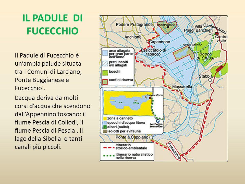 IL PADULE DI FUCECCHIO Il Padule di Fucecchio è unampia palude situata tra i Comuni di Larciano, Ponte Buggianese e Fucecchio. Lacqua deriva da molti