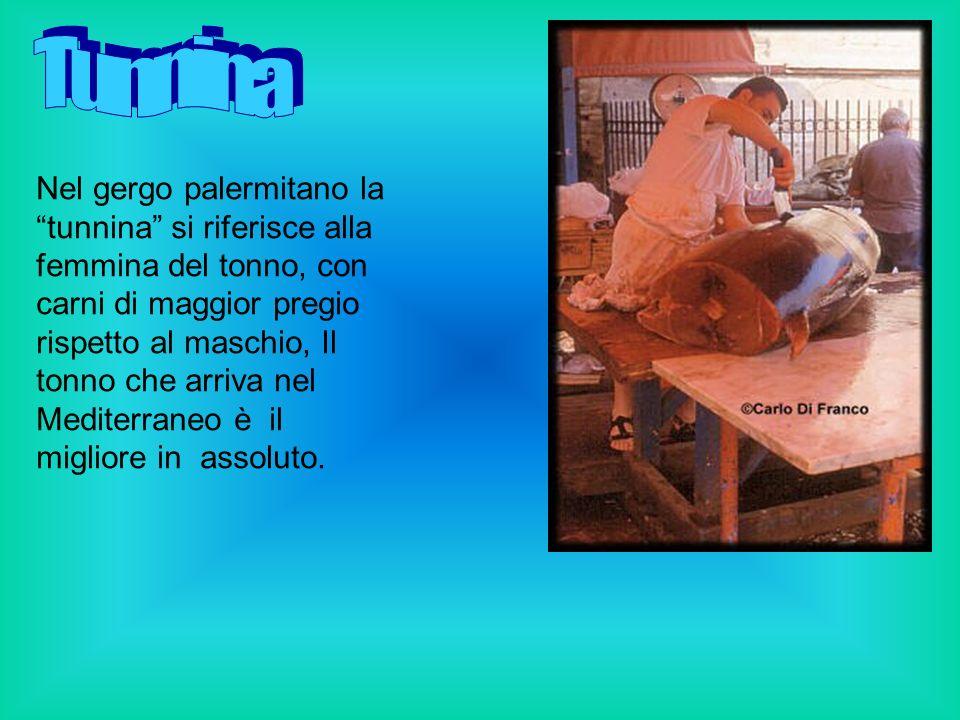 Oggi si punta sull allevamento del tonno ad elevato valore commerciale, nella moderna acquacoltura italiana.