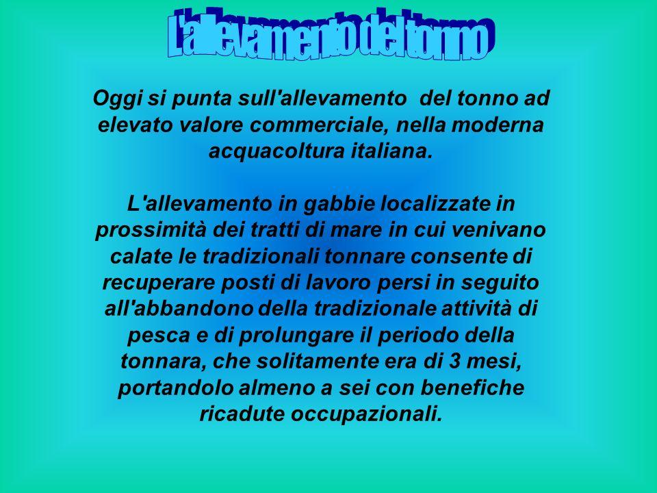 Oggi si punta sull'allevamento del tonno ad elevato valore commerciale, nella moderna acquacoltura italiana. L'allevamento in gabbie localizzate in pr