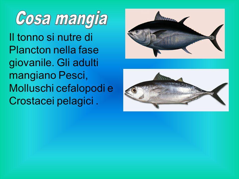 Vive in mare aperto, nei fondali mari calmi e temperati, a notevole profondità e anche in superficie.