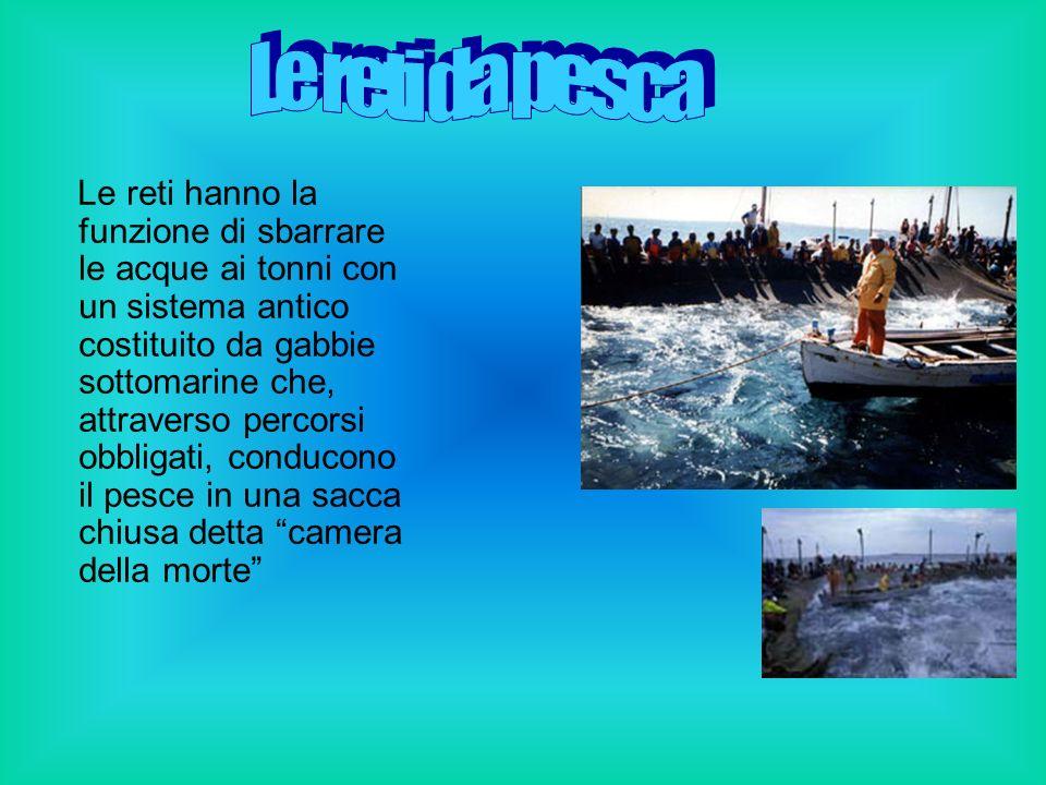 la quale viene poi stretta fino a quando i tonni possono essere issati sulle imbarcazioni con degli arpioni: si procede alla cosiddetta mattanza.