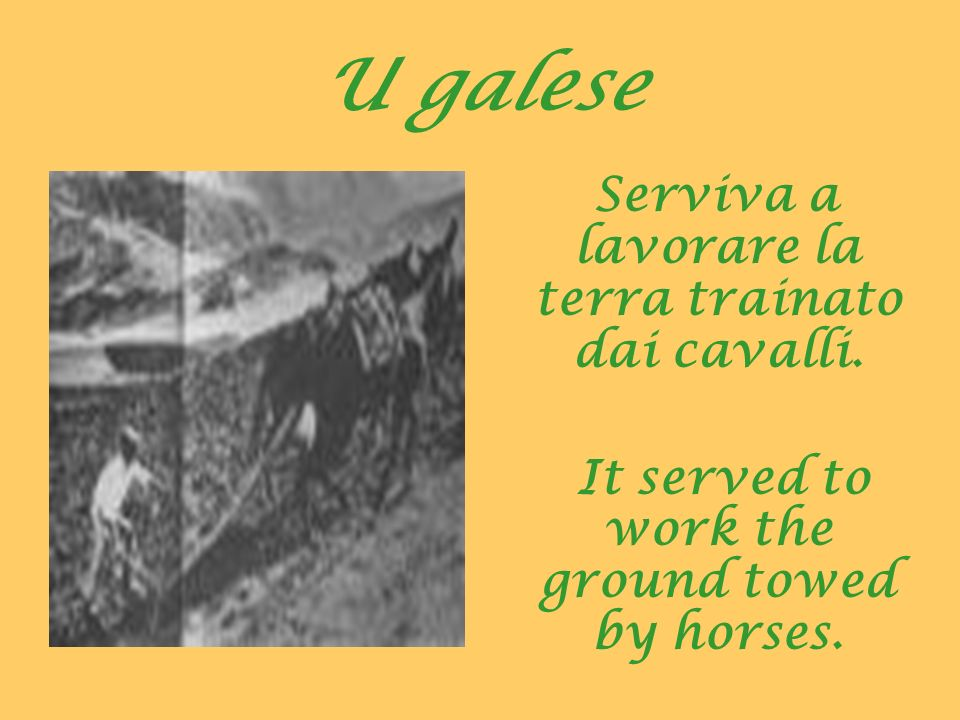 U galese Serviva a lavorare la terra trainato dai cavalli. It served to work the ground towed by horses.