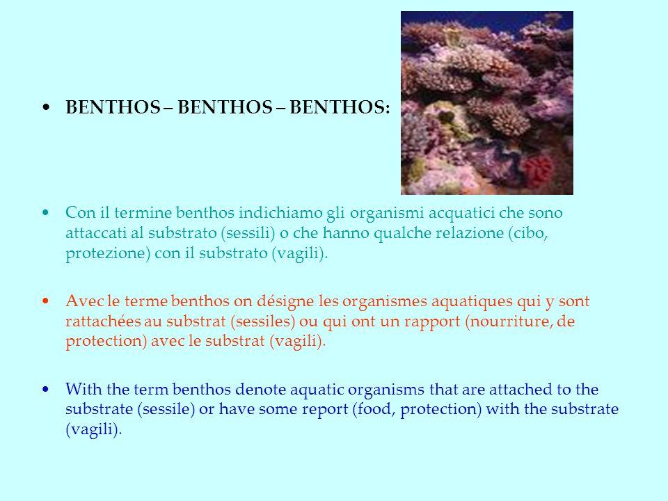BENTHOS – BENTHOS – BENTHOS: Con il termine benthos indichiamo gli organismi acquatici che sono attaccati al substrato (sessili) o che hanno qualche relazione (cibo, protezione) con il substrato (vagili).