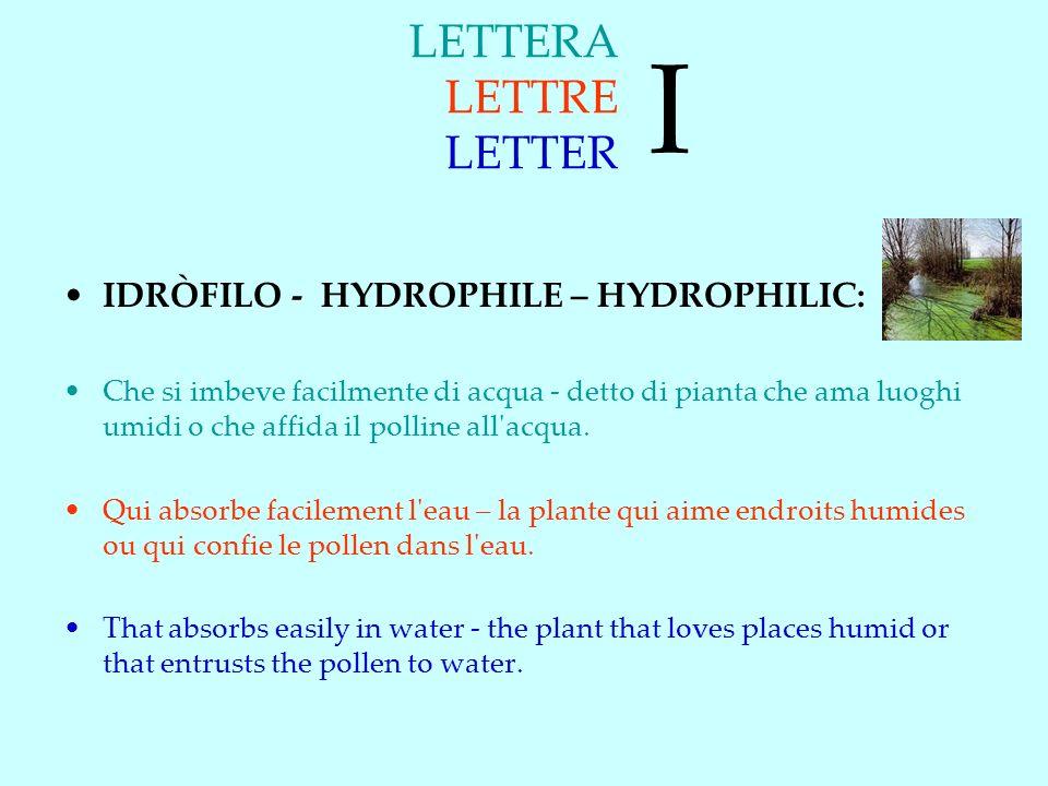 LETTERA LETTRE LETTER IDRÒFILO - HYDROPHILE – HYDROPHILIC: Che si imbeve facilmente di acqua - detto di pianta che ama luoghi umidi o che affida il polline all acqua.