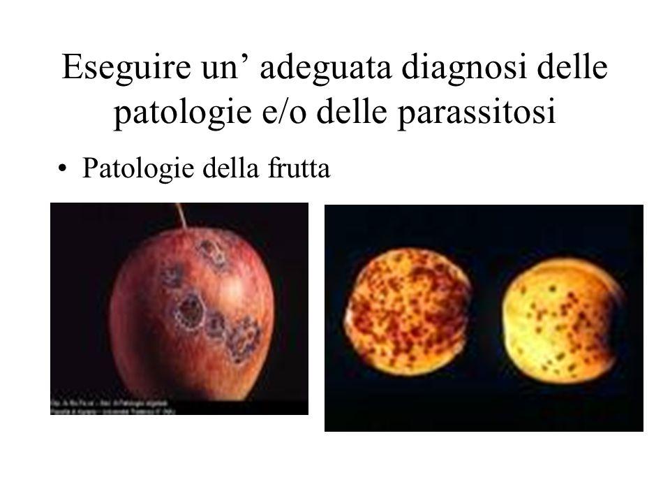 Eseguire un adeguata diagnosi delle patologie e/o delle parassitosi Patologie della frutta