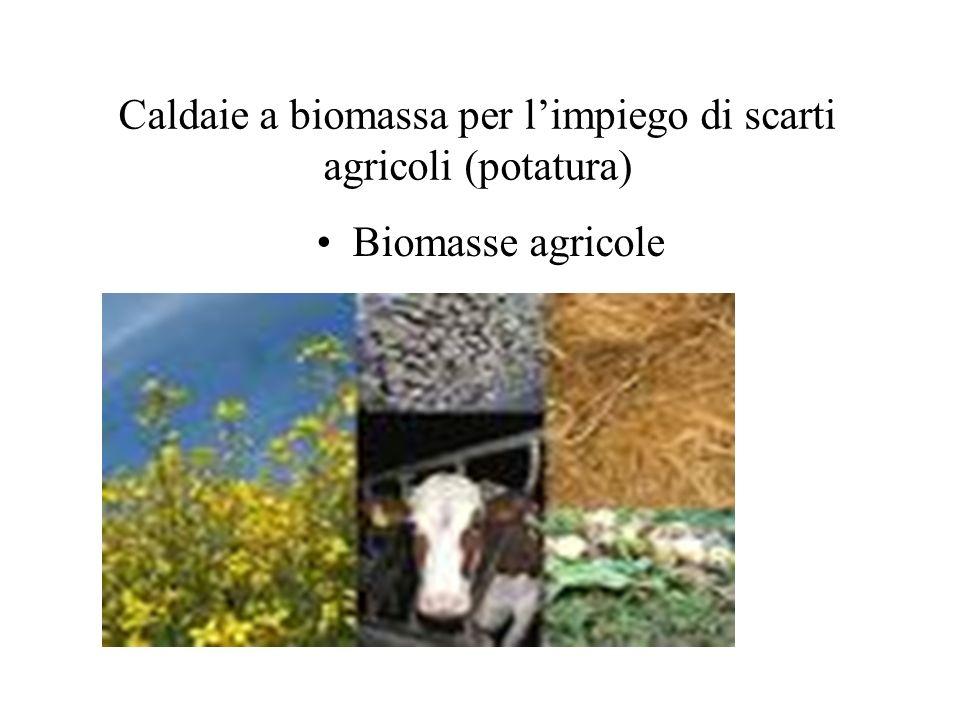Caldaie a biomassa per limpiego di scarti agricoli (potatura) Biomasse agricole