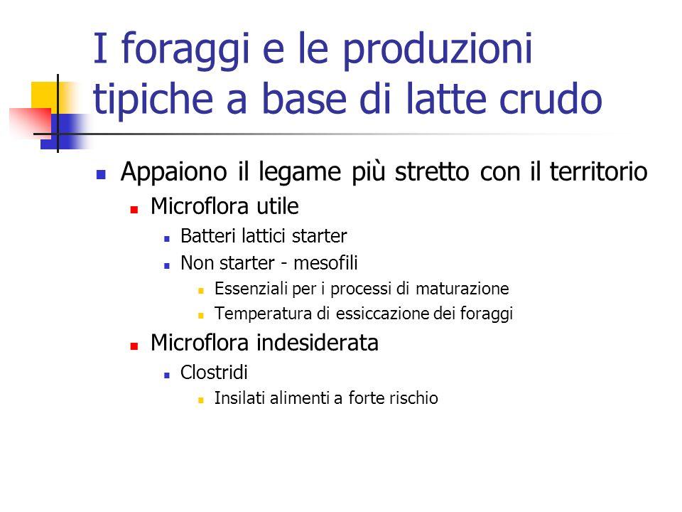 I foraggi e le produzioni tipiche a base di latte crudo Appaiono il legame più stretto con il territorio Microflora utile Batteri lattici starter Non