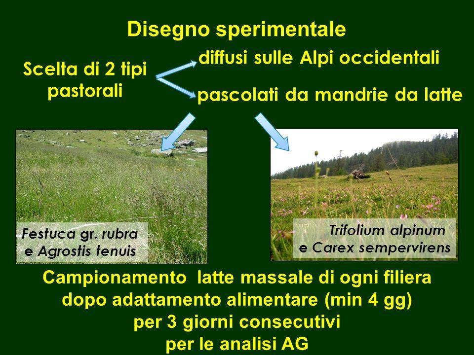 Disegno sperimentale Scelta di 2 tipi pastorali Trifolium alpinum e Carex sempervirens Festuca gr.