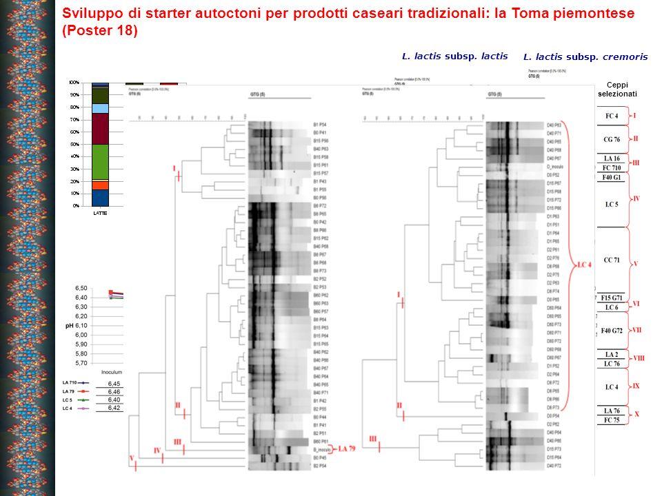 Sviluppo di starter autoctoni per prodotti caseari tradizionali: la Toma piemontese (Poster 18) Ceppi selezionati L. lactis subsp. lactis Ceppi selezi