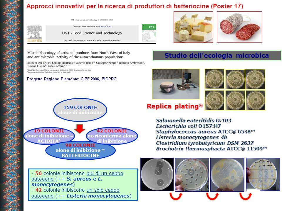 Approcci innovativi per la ricerca di produttori di batteriocine (Poster 17) 19 COLONIE alone di inibizione = ACIDITA 98 COLONIE alone di inibizione =