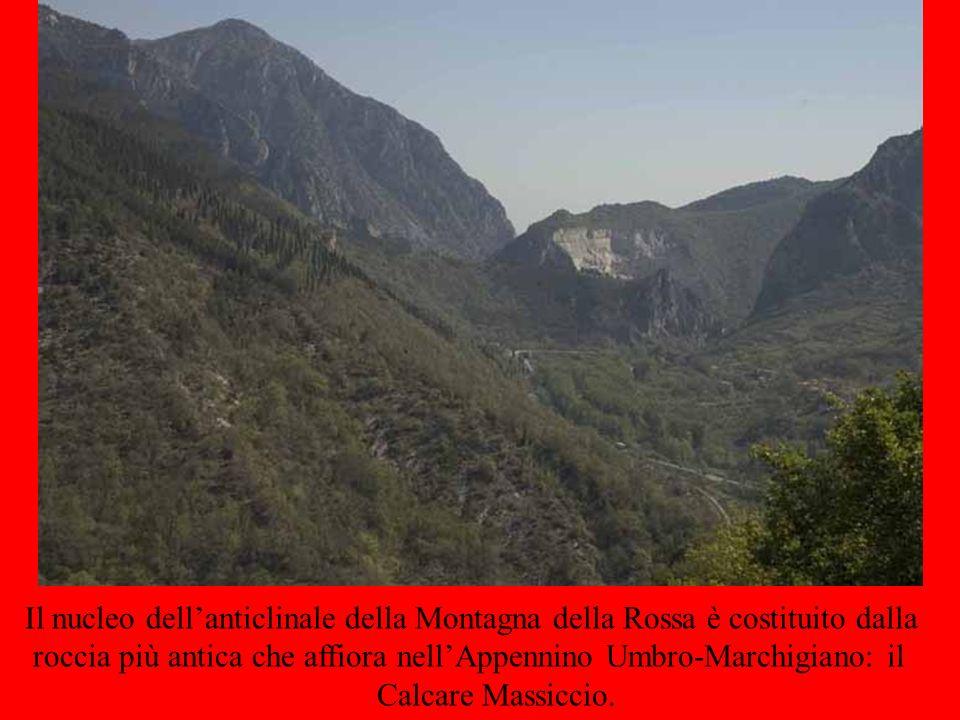 Il nucleo dellanticlinale della Montagna della Rossa è costituito dalla roccia più antica che affiora nellAppennino Umbro-Marchigiano: il Calcare Mass