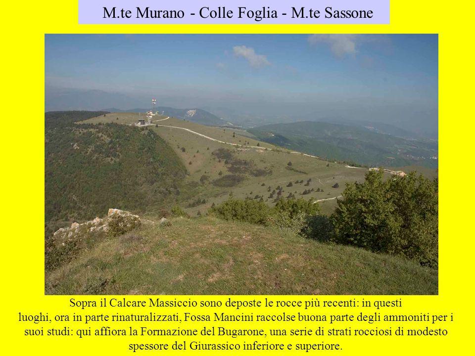 M.te Murano - Colle Foglia - M.te Sassone Sopra il Calcare Massiccio sono deposte le rocce più recenti: in questi luoghi, ora in parte rinaturalizzati