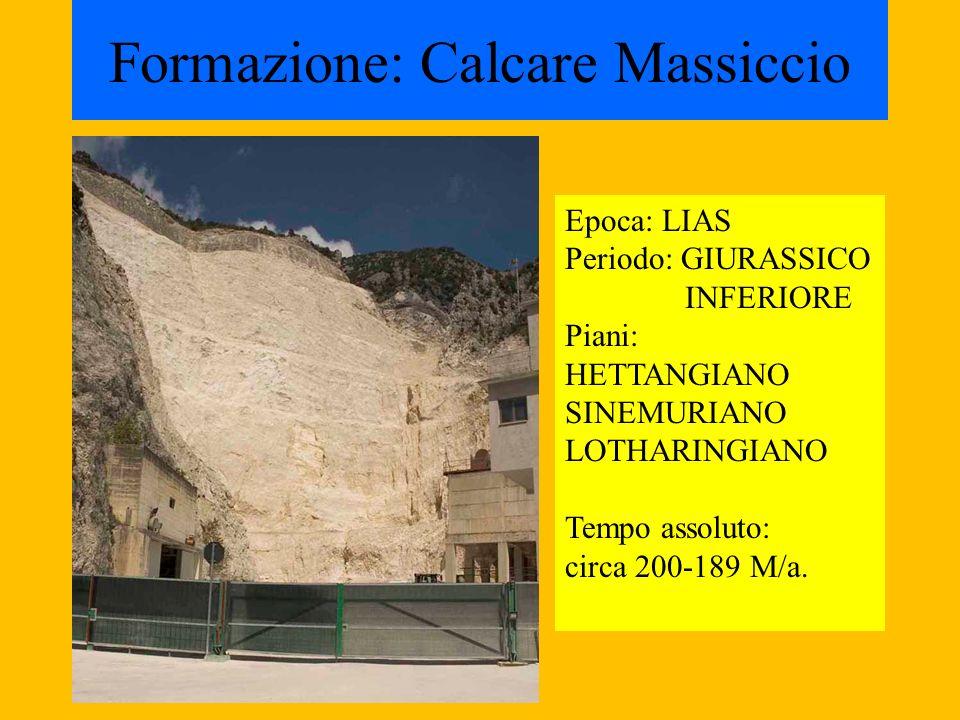 Formazione: Calcare Massiccio Epoca: LIAS Periodo: GIURASSICO INFERIORE Piani: HETTANGIANO SINEMURIANO LOTHARINGIANO Tempo assoluto: circa 200-189 M/a