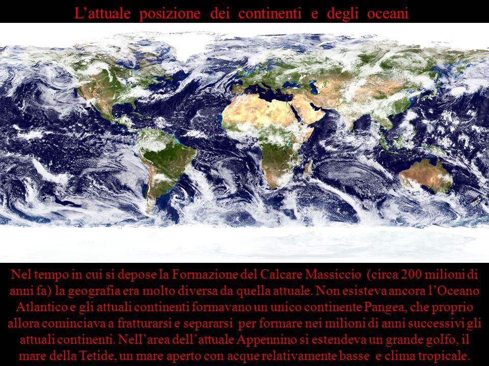 Lattuale posizione dei continenti e degli oceani Nel tempo in cui si depose la Formazione del Calcare Massiccio (circa 200 milioni di anni fa) la geog