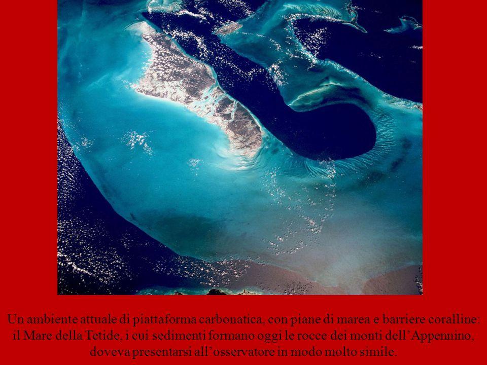 Un ambiente attuale di piattaforma carbonatica, con piane di marea e barriere coralline: il Mare della Tetide, i cui sedimenti formano oggi le rocce d