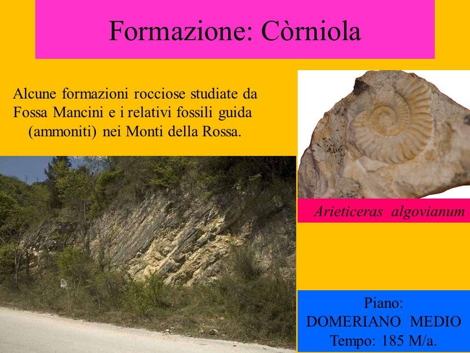 Formazione: Còrniola Arieticeras algovianum Piano: DOMERIANO MEDIO Tempo: 185 M/a. Alcune formazioni rocciose studiate da Fossa Mancini e i relativi f