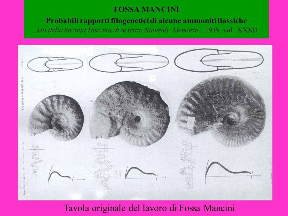 FOSSA MANCINI Probabili rapporti filogenetici di alcune ammoniti liassiche Atti della Società Toscana di Scienze Naturali. Memorie – 1919, vol. XXXII