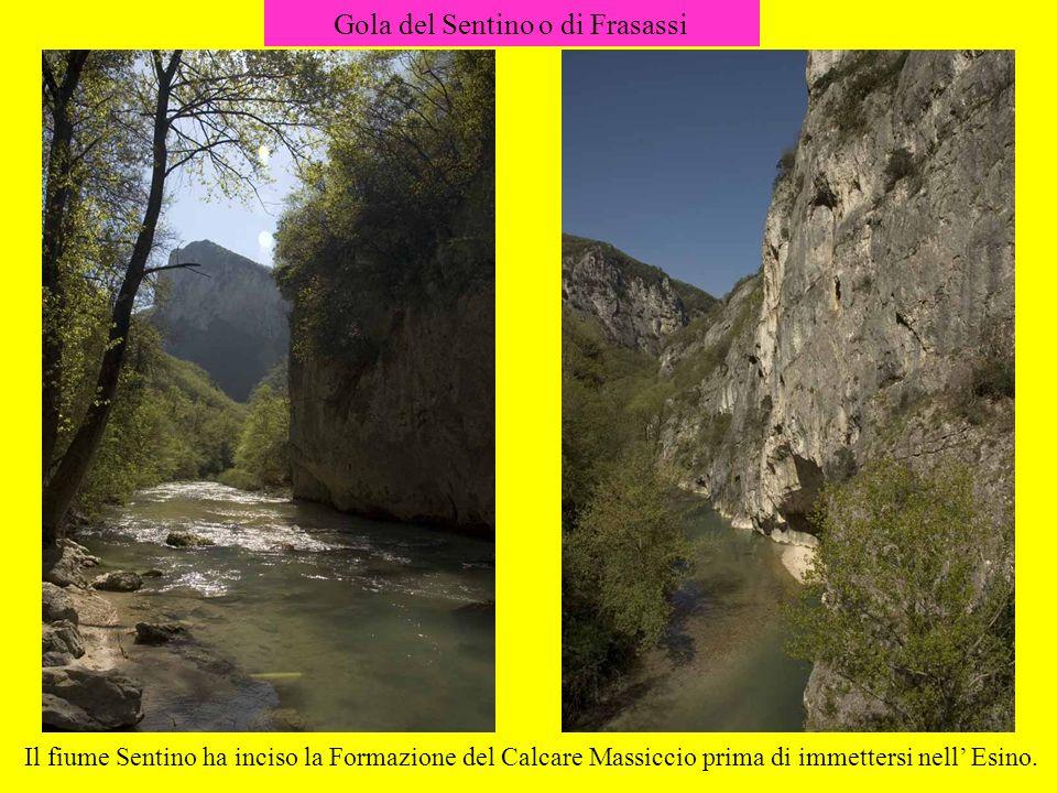 Gola del Sentino o di Frasassi Il fiume Sentino ha inciso la Formazione del Calcare Massiccio prima di immettersi nell Esino.