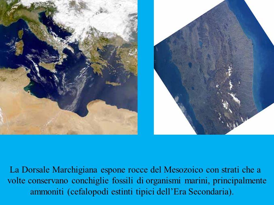La Dorsale Marchigiana espone rocce del Mesozoico con strati che a volte conservano conchiglie fossili di organismi marini, principalmente ammoniti (c