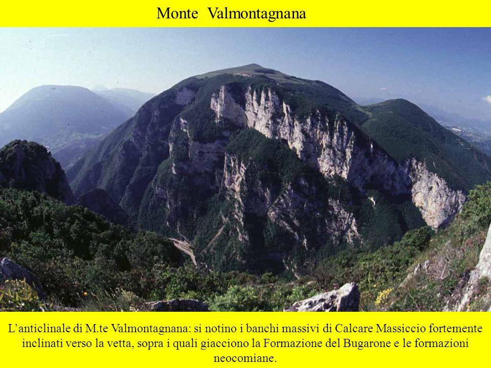 Monte Valmontagnana Lanticlinale di M.te Valmontagnana: si notino i banchi massivi di Calcare Massiccio fortemente inclinati verso la vetta, sopra i q