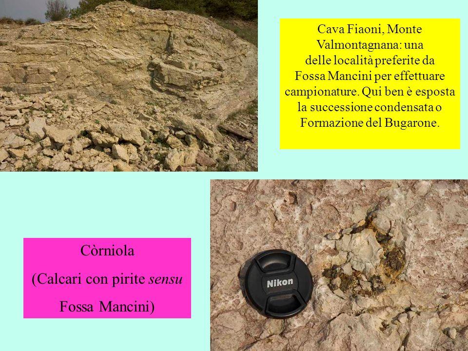 Cava Fiaoni, Monte Valmontagnana: una delle località preferite da Fossa Mancini per effettuare campionature. Qui ben è esposta la successione condensa