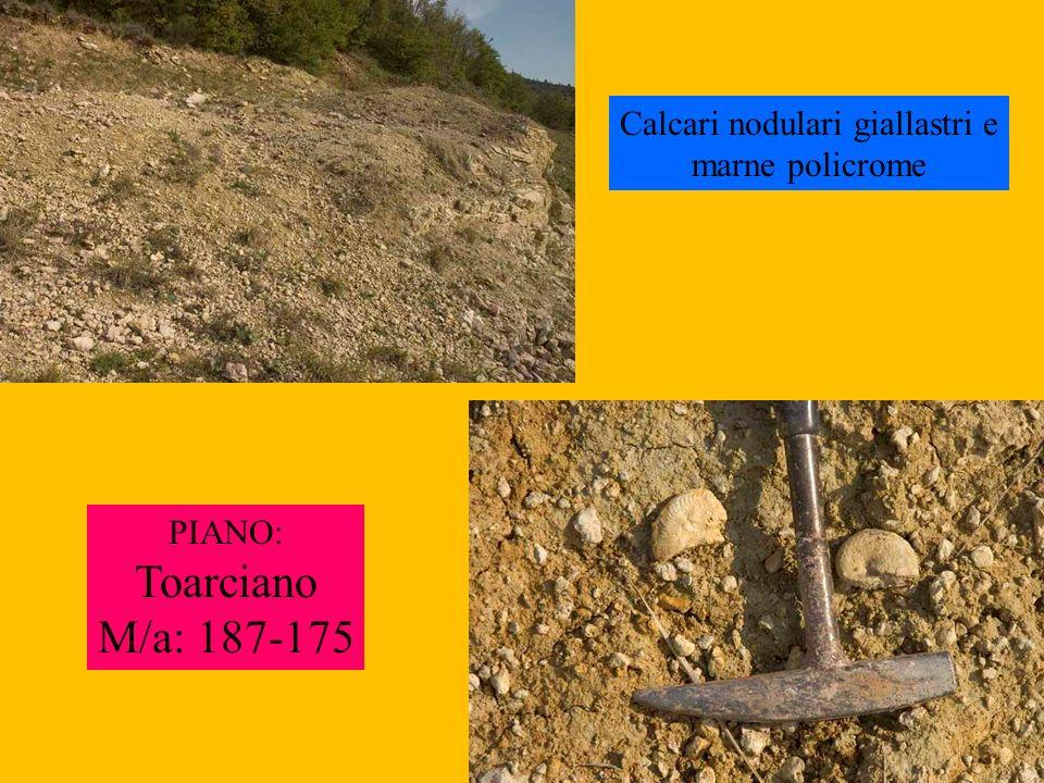 Calcari nodulari giallastri e marne policrome PIANO: Toarciano M/a: 187-175