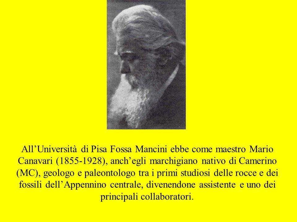 AllUniversità di Pisa Fossa Mancini ebbe come maestro Mario Canavari (1855-1928), anchegli marchigiano nativo di Camerino (MC), geologo e paleontologo