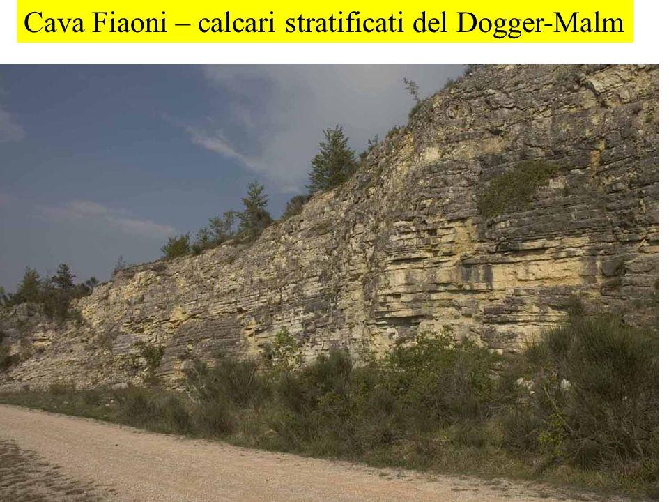 Cava Fiaoni – calcari stratificati del Dogger-Malm